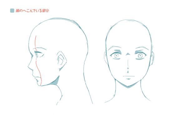 イラストレーターとしての頭部の知識:顔の凹凸
